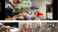 """Video Lật mặt các """"địa ngục thú rừng - 2021""""!: Buôn thú rừng tràn lan chính quyền địa phương ở đâu?"""
