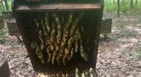 """Với công nghệ này, chỉ cần ngồi nhà lướt smartphone cũng theo dõi được đàn ong lấy mật cả vạn """"quân"""""""
