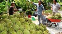 Việt Nam đề nghị Trung Quốc công nhận quy trình nhập khẩu tạm thời đối với sầu riêng, khoai lang