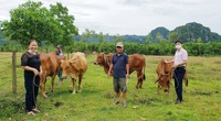 Quảng Bình: Vay vốn ưu đãi từ Ngân hàng Chính sách xã hội, nhiều hộ nông dân thành triệu phú