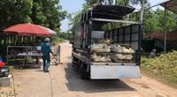 Thái Nguyên: 140.000 con gia cầm, 1.800 con lợn cần bán, xã điều xe giúp nông dân đưa đi tiêu thụ