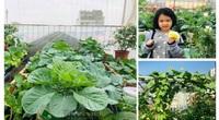 Vườn rau sân thượng đẹp như tranh của cô giáo Thủ đô, giãn cách vì dịch Covid-19 không phải lo tích trữ rau xanh