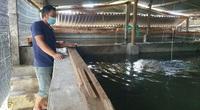 """Phú Yên: Nuôi loài cá dài ngoẵng ví như """"nhân sâm nước"""", bắt bán 1 lứa ông nông dân thu 1 tỷ"""