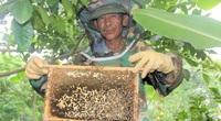 Hà Tĩnh: Dù giá mật ong giảm rất sâu, nhưng vì sao nông dân vẫn bán mật ong trầy trật?