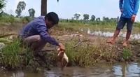 Nín thở: Cao thủ Đồng Tháp không dùng cần mà dùng con gà để câu cá ... và cái kết
