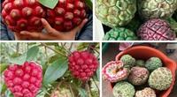 Loại quả vỏ xanh ruột đỏ được mệnh danh thần dược phòng the, dân Việt không tiếc tiền mua về bồi bổ