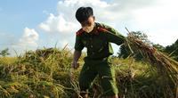 Ảnh: Công an Thủ đô đội nắng, giúp người dân vùng cách ly y tế gặt lúa từ sáng đến chiều tối
