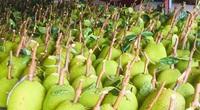 Giá mít Thái hôm nay 19/9: Giá tăng hay giảm, mùa mưa ra trái non bị thiếu chất thì xử lý thế nào?