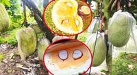 Giá mít Thái ngày 20/9: Giảm mạnh nay giá đi ngang, cách bón phân để mít ra trái loại Nhất, múi lên màu, ăn ngọt