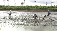 """Hàng chục nghìn héc-ta đất nuôi tôm sau thu hoạch: Phải làm gì để tiếp tục """"đẻ ra tiền""""?"""