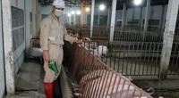 Nghịch lý: Có thế mạnh nông nghiệp nhưng Việt Nam vẫn chi 3 tỷ USD nhập khẩu thức ăn chăn nuôi