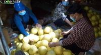 Hà Tĩnh: Độc đáo phiên chợ đêm chỉ một năm một lần và chỉ bán duy nhất một loại quả cực ngon