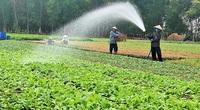 Hà Nội vẫn sản xuất tối đa rau xanh phục vụ nhu cầu của người dân, bất chấp dịch Covid-19
