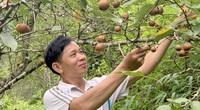 """Bắc Kạn: Anh nông dân có bằng kỹ sư nông nghiệp trồng cây quen hay cây lạ đều """"mát tay"""", ra trĩu quả"""