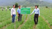 Bình Định: Giải ngân 1.609 tỷ đồng cho nông dân làm ăn