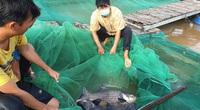 """Cần Thơ: """"Robinson"""" Cồn Sơn nuôi cá quý hiếm trên sông Hậu đã được bình chọn """"Nông dân Việt Nam xuất sắc 2021"""""""
