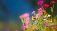 Cuối tháng 9, 4 con giáp được quý nhân chỉ lối, thành công rực rỡ, đào hoa nở rộ