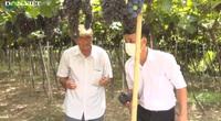 Lão nông Ninh Thuận nổi tiếng cả nước với thương hiệu nho sạch Ba Mọi