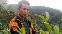 """Lạng Sơn: Ở vùng đất này dân trồng thứ cây xanh tốt quanh năm, ra thứ hoa vàng bán với """"giá vàng"""""""