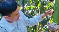 Hải Dương: Nông dân thành phố này trồng thứ tre gì lấy măng mà mỗi ha cho lãi ròng tới 230-260 triệu/năm?