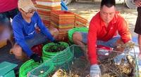 """Phú Yên: Dân hối hả bắt tôm bán tránh mưa, bão, giá các loại tôm trong tình trạng """"kẻ đi lên, người đi xuống"""""""
