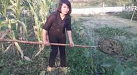Thái Nguyên: Cô giáo mầm non nuôi 70.000 con ốc nhồi-một nghề thì sống, đống nghề lại càng sống khỏe hơn