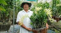 TP HCM: Trồng những loài hoa lan xưa cũ nay đẹp lạ, dân chơi đang săn lùng