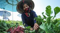 Chợ dân sinh mở cửa, nông dân ra đồng... những ngày đầu Hà Nội thực hiện Chỉ thị 15
