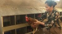 """Phú Thọ: Bỏ lợn nuôi gà với quy mô """"siêu khủng"""", chị """"Nông dân Việt Nam xuất sắc 2021"""" thu tiền tỷ mỗi tháng"""