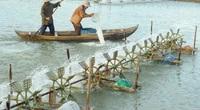 Bình Định: Trời lúc nắng lúc mưa, tôm nuôi chết hàng loạt, người nuôi lao đao