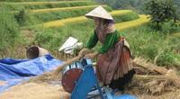 Lào Cai: Vùng cao Bắc Hà trúng mùa 2 loại hạt vàng, nhiều người không còn phải sang Trung Quốc làm thuê