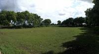 Kể chuyện làng: Sân bóng làng và đàn chó ông Bạt
