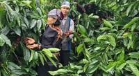 Được Mỹ ưa chuộng, giá một loại nông sản của Việt Nam bật tăng nhưng vẫn thua đối thủ cạnh tranh