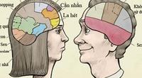 Não bộ đàn ông chủ yếu xử lý thông tin về... sex, bia
