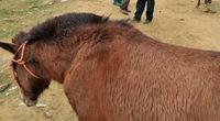 Đi chợ ngựa đầu năm Ngọ