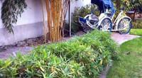 Ghé thăm khu vườn đậm chất Việt trên đất Hungary
