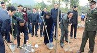 Phó Chủ tịch nước Đặng Thị Ngọc Thịnh phát động Tết trồng cây tại Đền Hùng