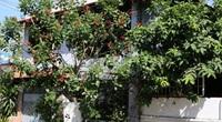 Chánh Tín được ở lại căn nhà tới tháng 9.2014