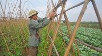 Sớm ban hành nghị định về HTX nông nghiệp