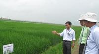 Ra mắt trung tâm nghiên cứu lúa lai đầu tiên tại Việt Nam: Giảm phụ thuộc giống  với Trung Quốc