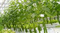 Đồng Nai phát triển nông nghiệp công nghệ cao: Cho vay vốn không tính lãi