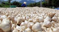 Nông sản rõ xuất xứ mới dễ đưa vào Hàn Quốc