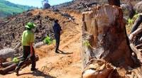 Nóng: Bắt Tổng Giám đốc chủ mưu phá hơn 60ha rừng tại Bình Định