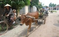 Người làng tôi ở Sài Gòn (kỳ 3): Cầu nối với làng
