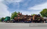 Kể chuyện làng: Truyền kỳ về những cây đa ở làng Phú Nhơn