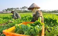 Thúc đẩy đổi mới sáng tạo - Hướng tới một nền nông nghiệp xanh