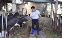 """Ngành chăn nuôi Lâm Đồng đón """"làn gió"""" mới, thời cơ cho các nhà đầu tư nuôi lợn, bò sữa, gà"""