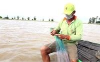 Đồng Tháp: Nước nổi tràn đồng, nông dân dong thuyền giăng lưới bắt hàng chục ký cá đồng