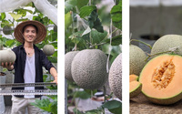 Đã mắt với khu vườn tươi tốt, trồng rau sạch, củ quả trên sân thượng của 9X Sài Gòn