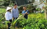 Tiên Phước xây dựng nông thôn mới: Sức bật liên kết sản xuất, OCOP